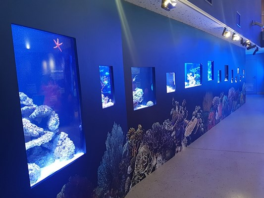 Aquarium - The Reef Gallery